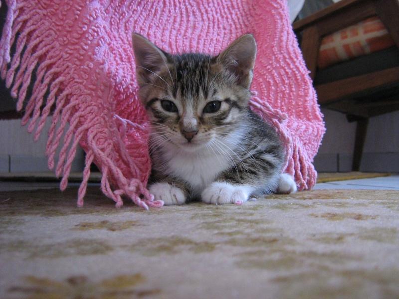 Guimauve, chatonne femelle, 2 mois Img_0111