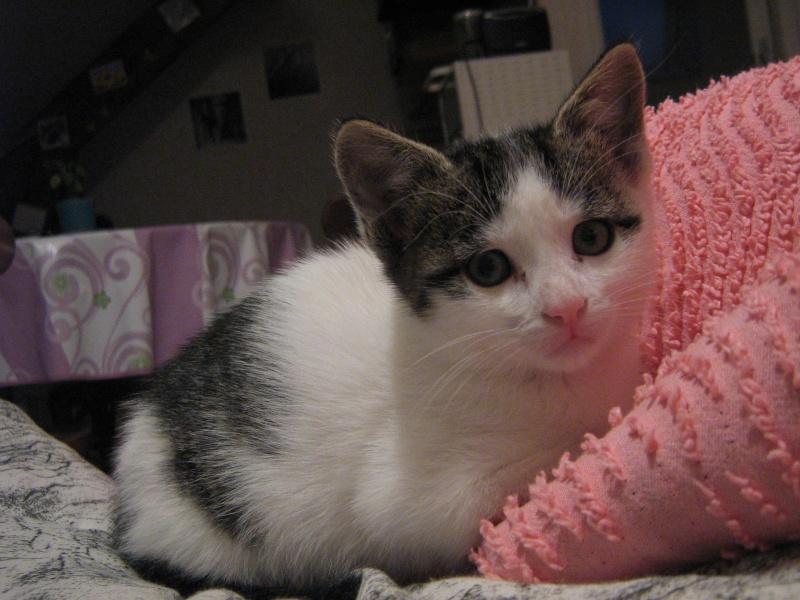 Jessie, chaton femelle, 2 mois Img_0114