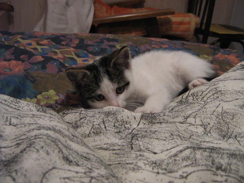 Jessie, chaton femelle, 2 mois Img_0115