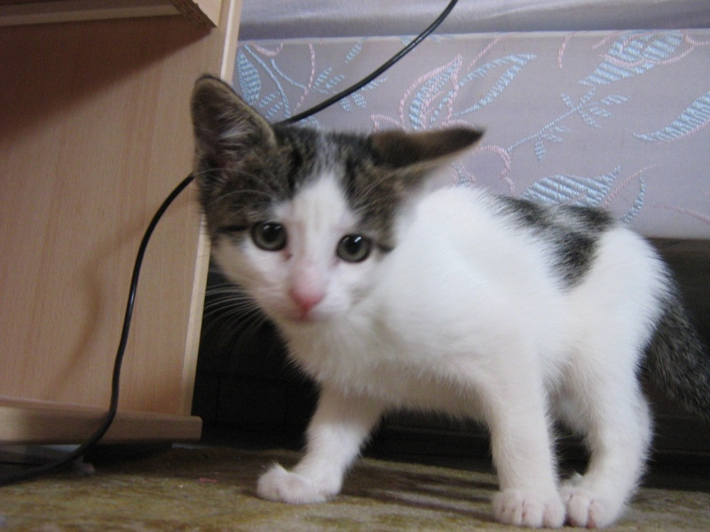 Jessie, chaton femelle, 2 mois Img_0116