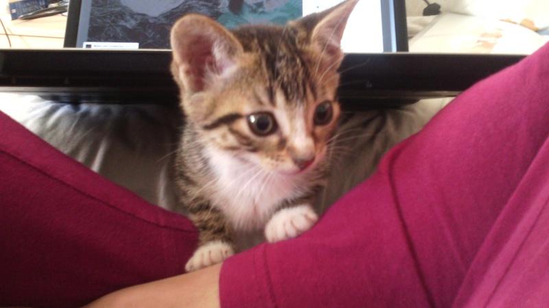 Guimauve, chatonne femelle, 2 mois Img_2010