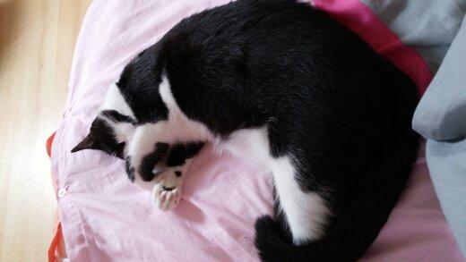 jess rebaptisée kira petite adoptée par Kira Jess - Page 2 14065610