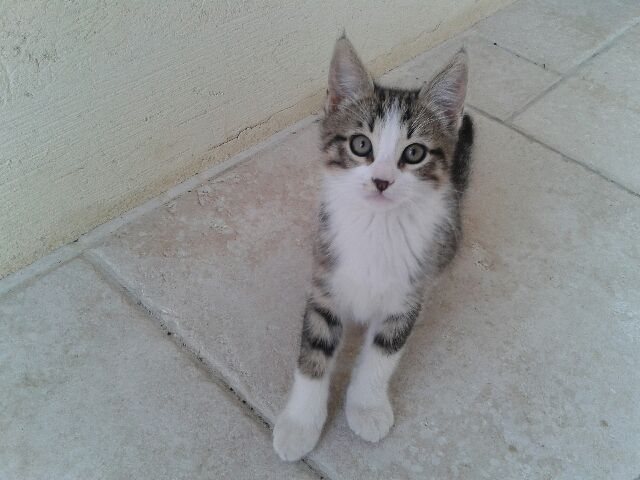 chatons nés le 31/03  la Féline Meyreuillaise (13) 20140610