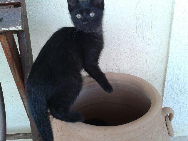 chatons nés le 31/03  la Féline Meyreuillaise (13) 20140611