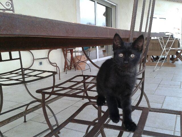 chatons nés le 31/03  la Féline Meyreuillaise (13) 20140614