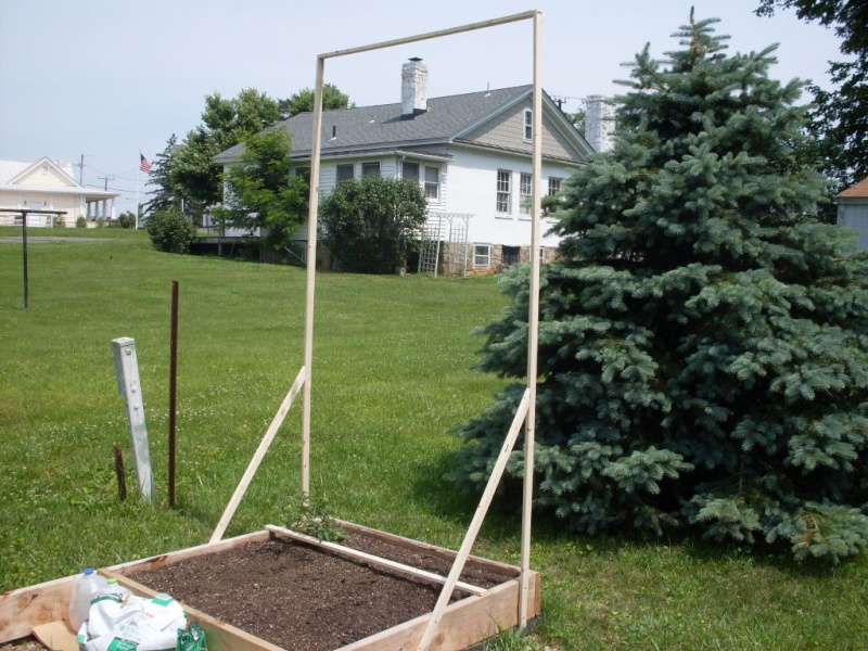 (Phase 1) Construction of 10' x 4' Bed Trelli10