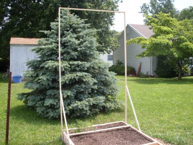 (Phase 1) Construction of 10' x 4' Bed Trelli11