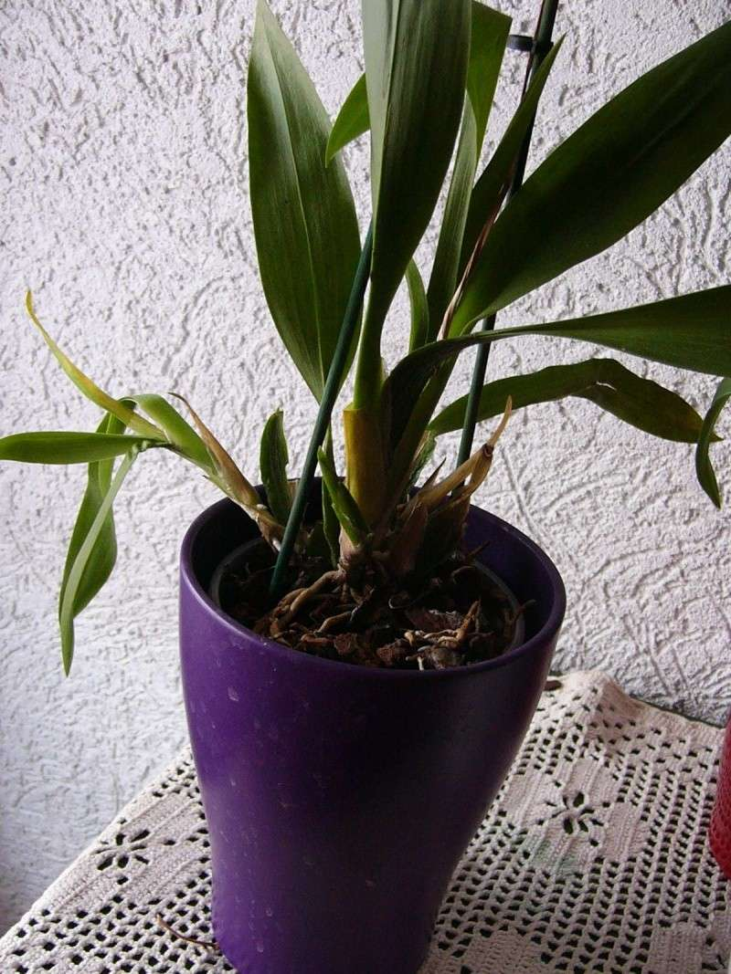 nach Tauchen: gelbe Blätter,braune Blätter, Befall an Wurzeln Braunb10