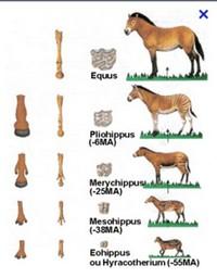 Les chevaux prehistoriques Chevau10