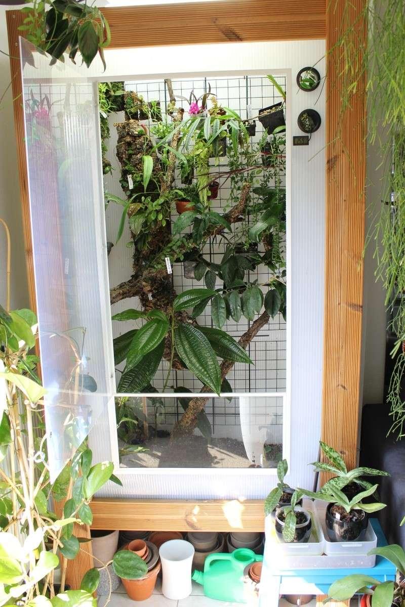 Orchidarium  Img_3115