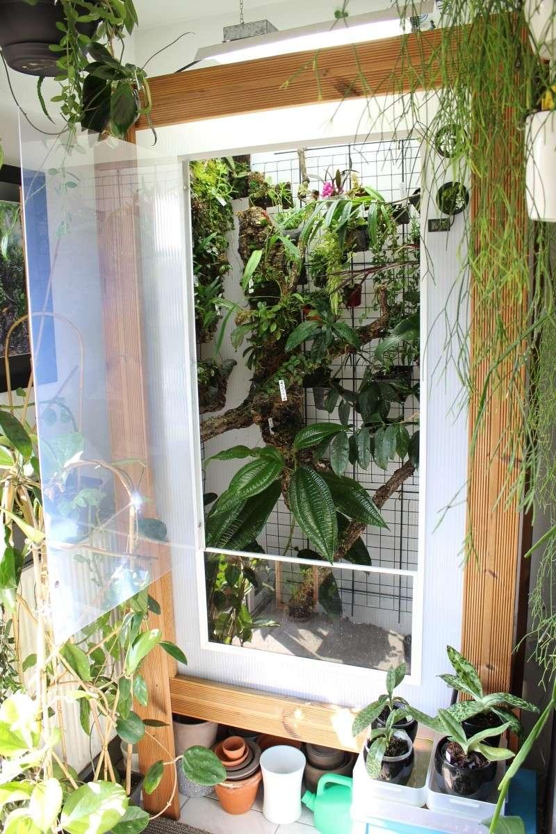 Orchidarium  Img_3116