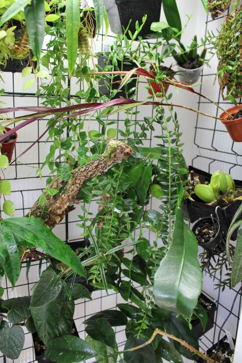 Orchidarium  Img_3117