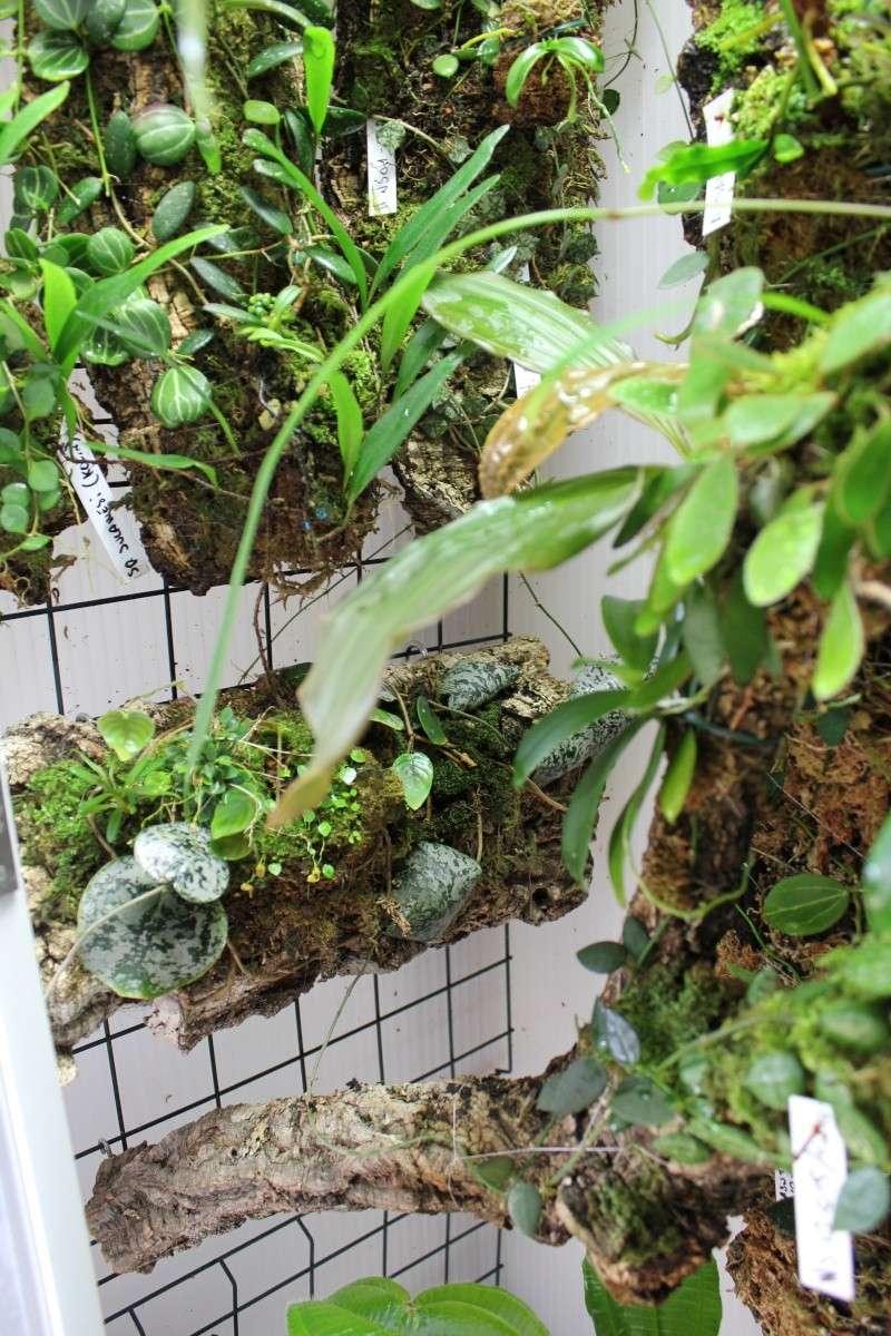Orchidarium  Img_3118