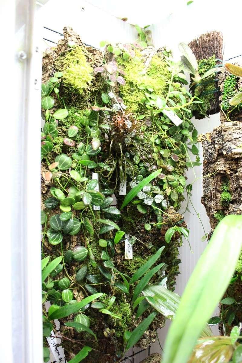 Orchidarium  Img_3119