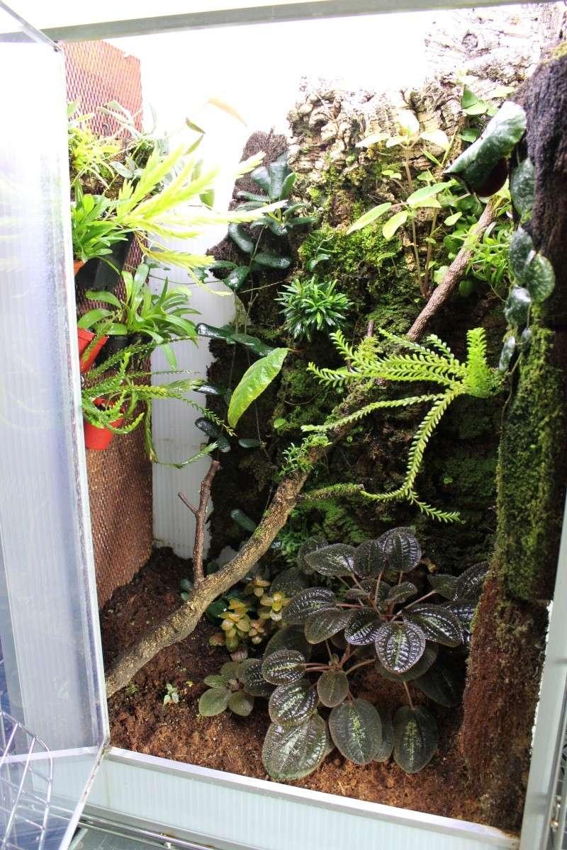 Orchidarium  Img_3124