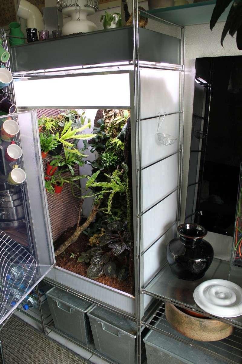 Orchidarium  Img_3125