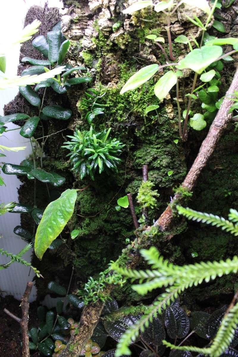 Orchidarium  Img_3127