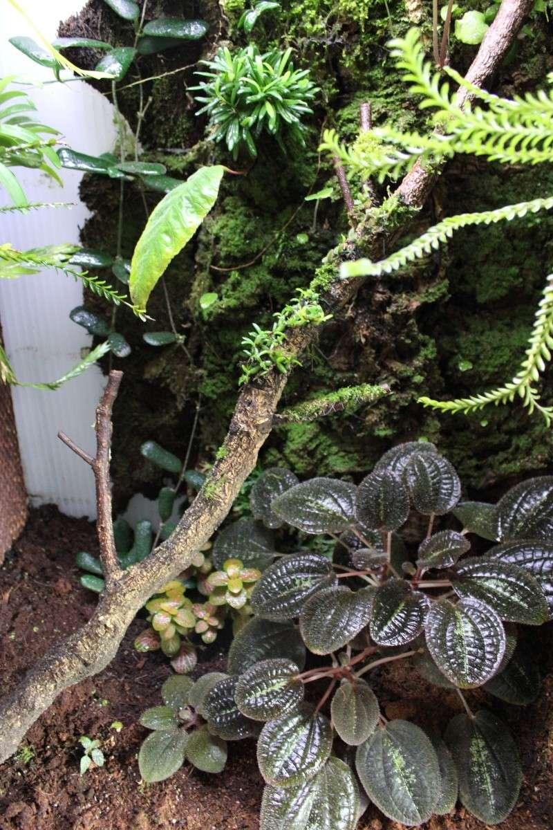 Orchidarium  Img_3128