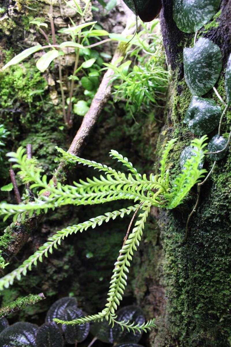Orchidarium  Img_3130