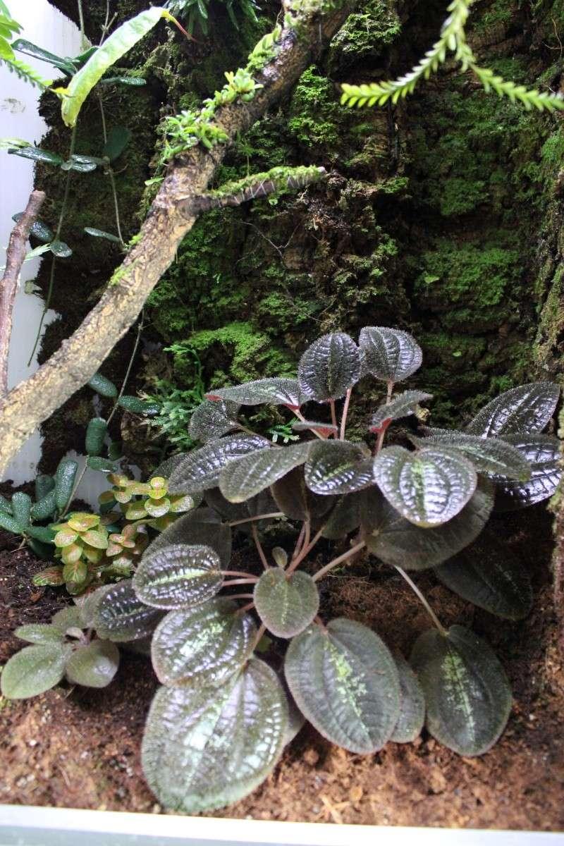 Orchidarium  Img_3131