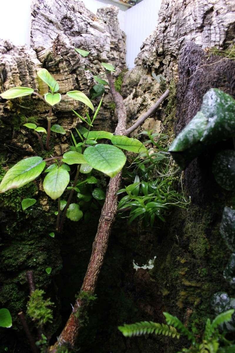 Orchidarium  Img_3132