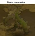Indices Chasse aux trésors et Portail. Plante10