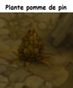Indices Chasse aux trésors et Portail. Plante11