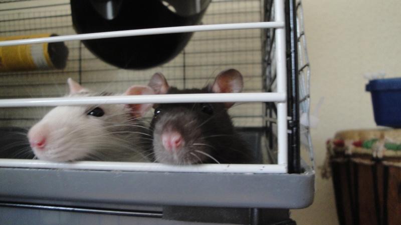❤ Les ratons de la St Valentin ❤ - Page 3 Dsc04714
