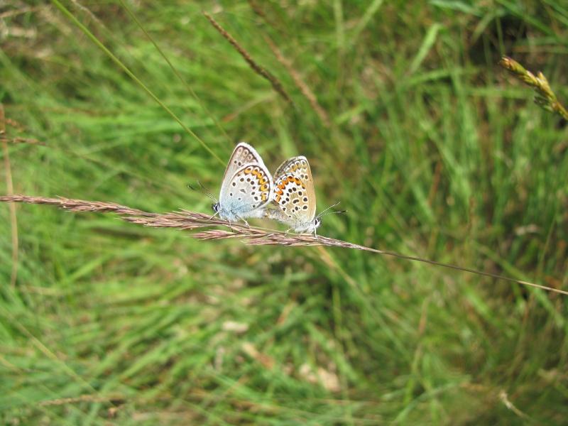 Journée de formation aux papillons à Néant sur Yvel Img_8011