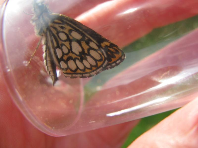 Journée de formation aux papillons à Néant sur Yvel Img_8013