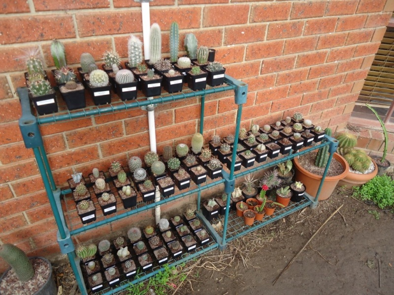 My cacti collection (lots of photo's) Dsc01436
