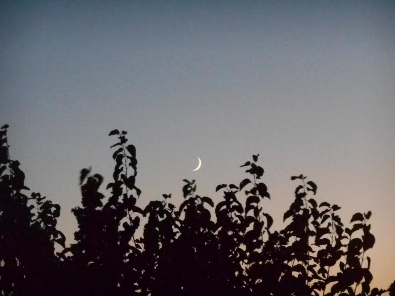 Il cielo del mese - Pagina 9 01511