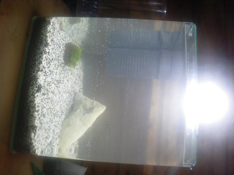 Remise en eau aquarium 25L Imgp5910