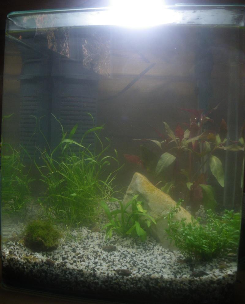 Remise en eau aquarium 25L - Page 2 Imgp5913