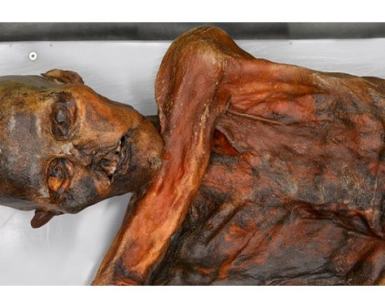Descubren ADN no humano en la momia llamada el Hombre de Hielo (Ötzi) de 5.300 años de antigüedad 612