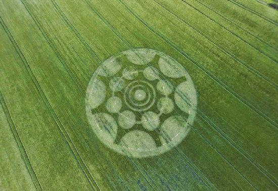 Crop Circles. Círculos de las Cosechas 2014 Cc31_110