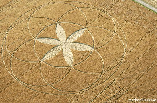 Crop Circles. Círculos de las Cosechas 2014 Cc32_110