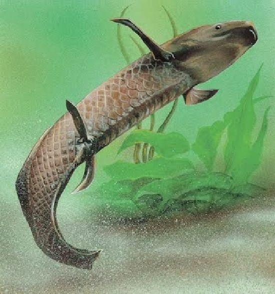 Experimentos con un pez que puede caminar P5_110