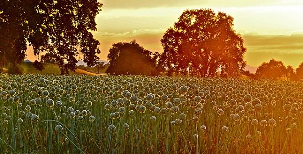 Bon Mercredi Flickr10