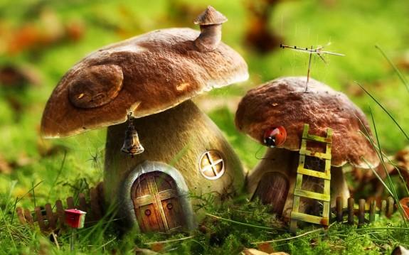 Bon Mercredi Mushro10