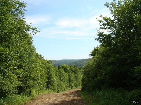 Une petite tournée dans notre Forêt du Quebec St_mic13