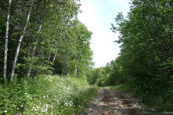 Une petite tournée dans notre Forêt du Quebec St_mic17