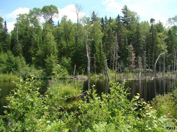 Une petite tournée dans notre Forêt du Quebec St_mic20