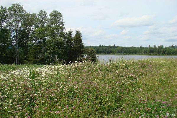 Une petite tournée dans notre Forêt du Quebec St_mic27