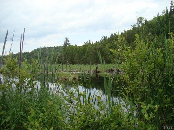 Une petite tournée dans notre Forêt du Quebec St_mic31