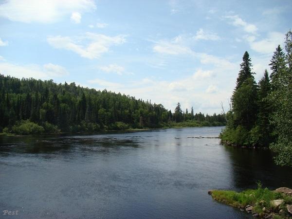 Une petite tournée dans notre Forêt du Quebec St_mic36