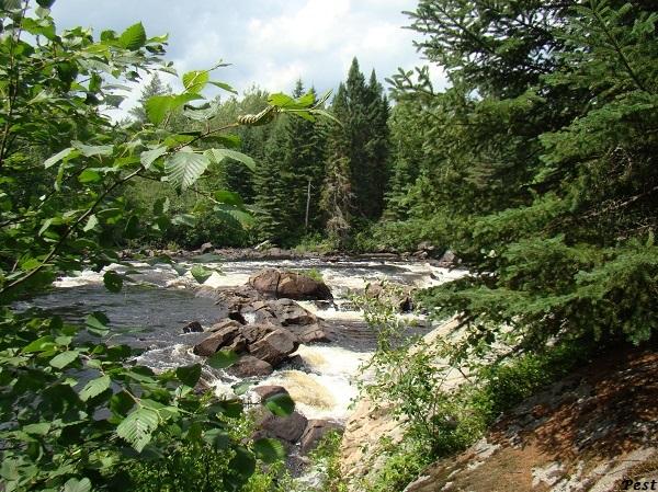 Une petite tournée dans notre Forêt du Quebec St_mic38