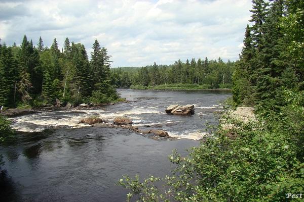 Une petite tournée dans notre Forêt du Quebec St_mic39