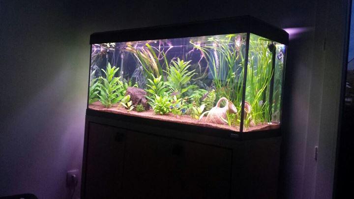 voici mon bac 240 litres Aquari13