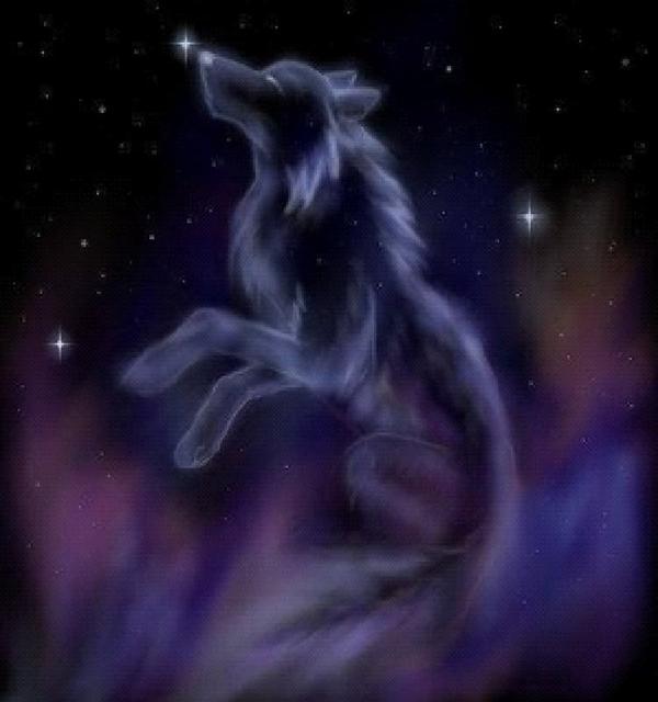 ~☆~Sirius, Wolf Star~★~ Wolf_s10